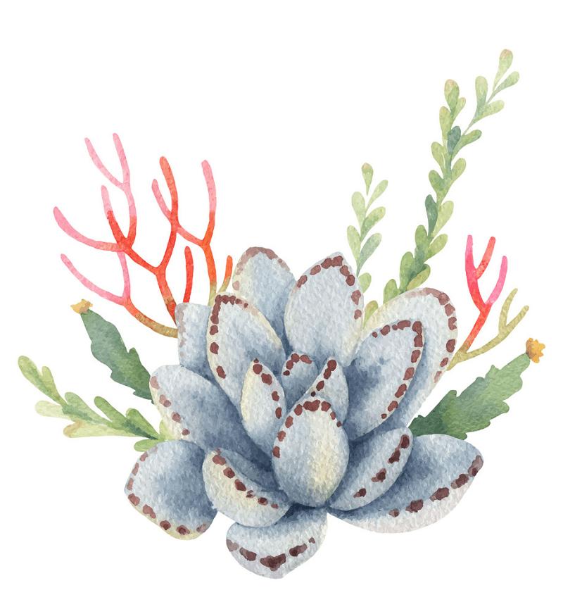 Watercolor Succulent clipart 4