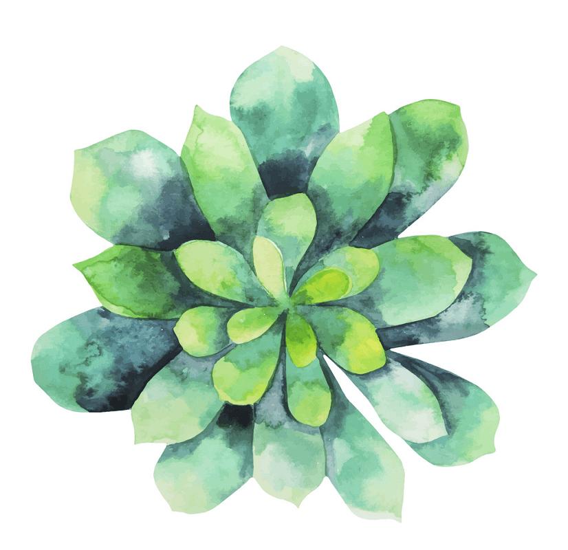 Watercolor Succulent clipart free