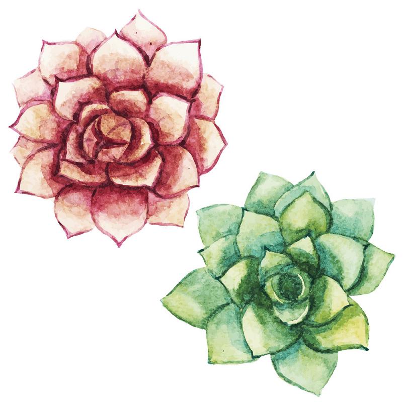 Watercolor Succulent clipart png