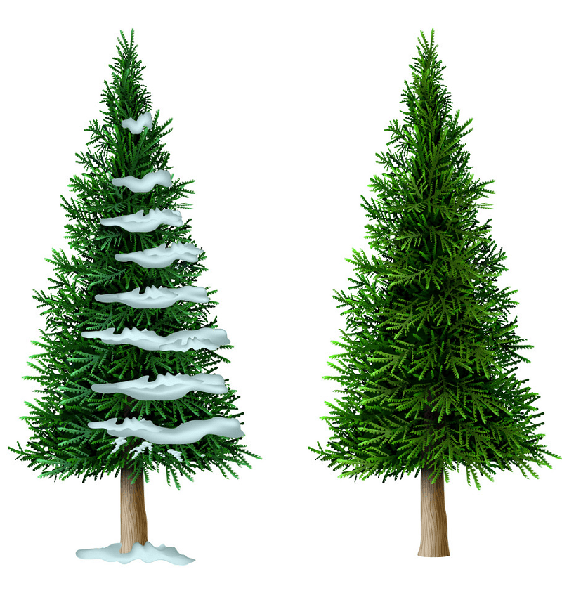 Download Pine Tree clipart free