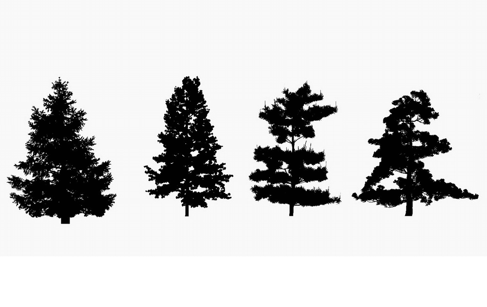 Pine Tree Silhouette clipart 1