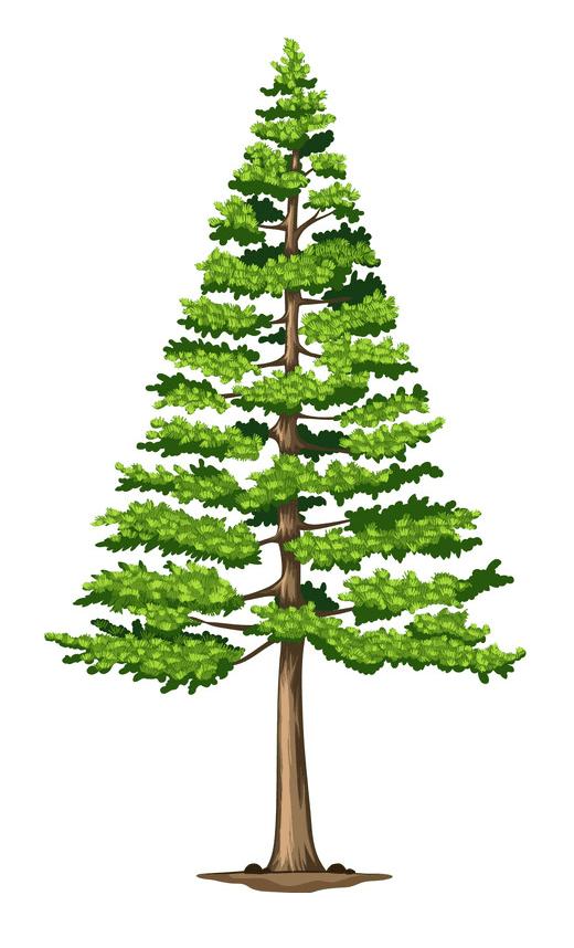 Pine Tree clipart free 1