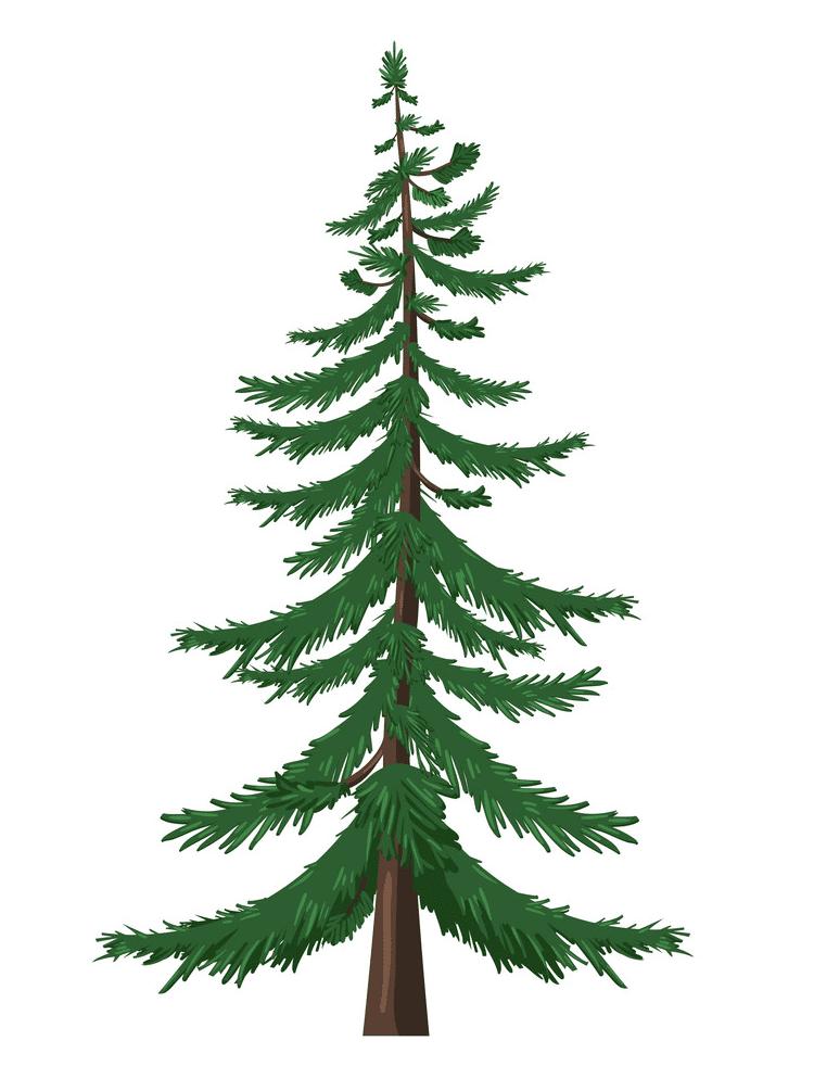 Pine Tree clipart free 2
