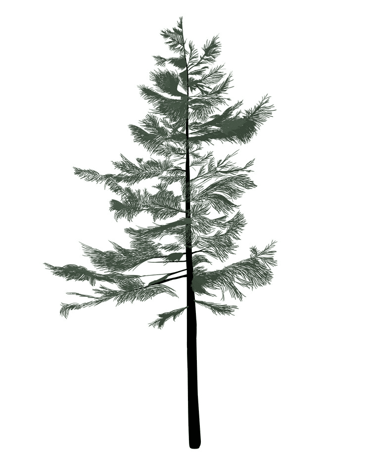 Pine Tree clipart free 3