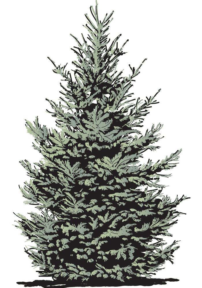 Pine Tree clipart free 4