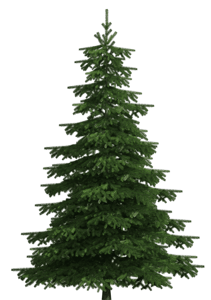 Pine Tree clipart png