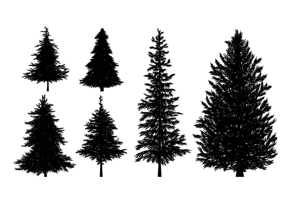 Pine Trees Silhouette clipart