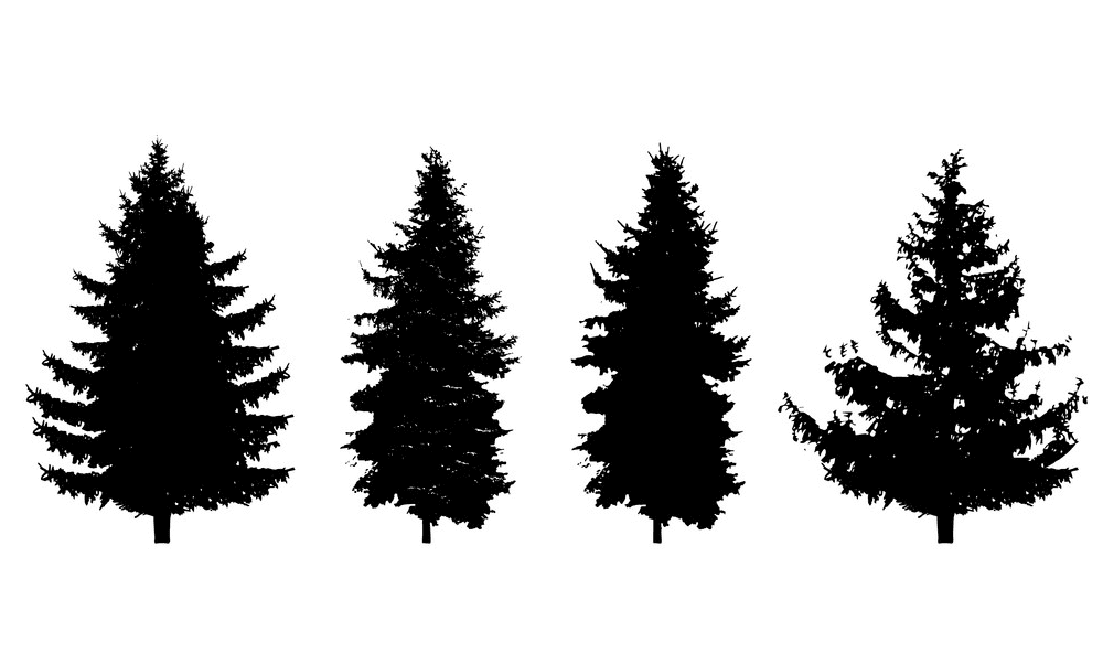 Pine Trees Silhouette picture