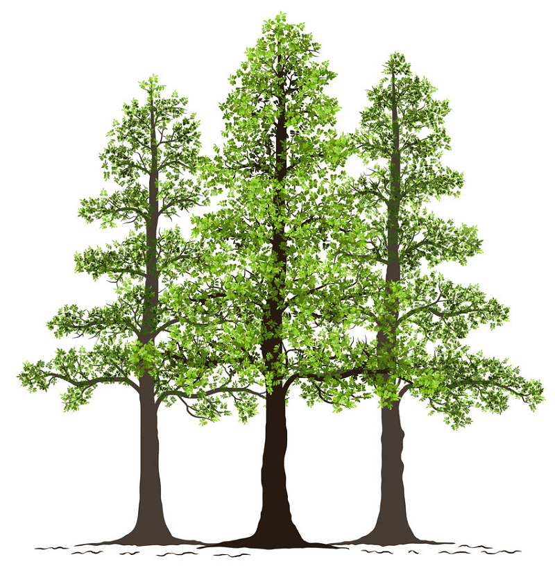 Pine Trees clipart
