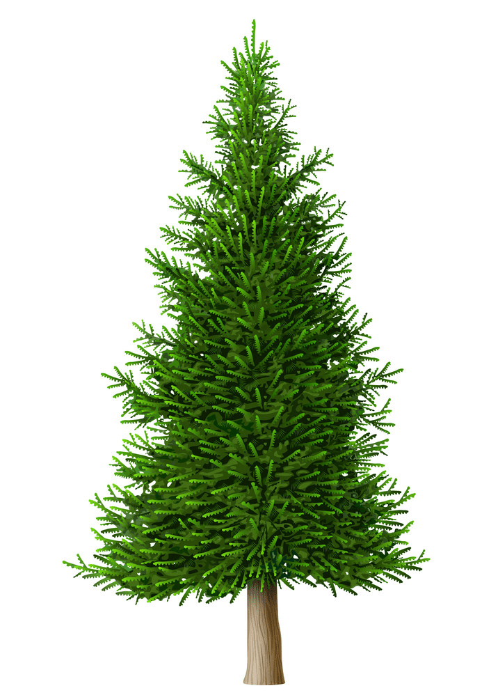 Realistic Pine Tree clipart free
