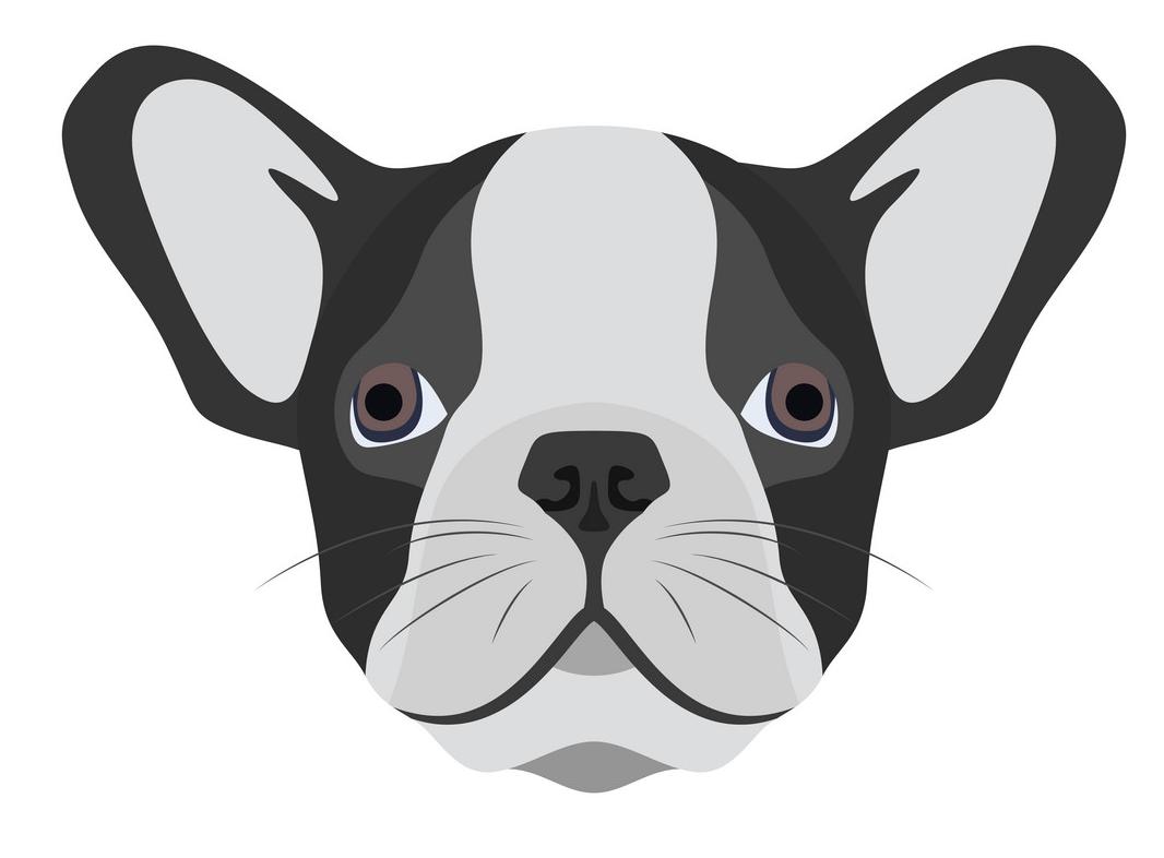 Bulldog Face clipart png images