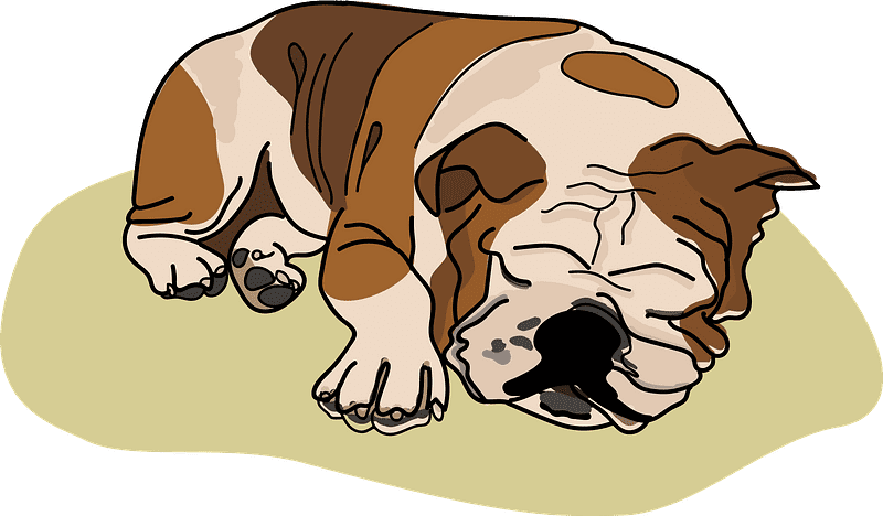 Bulldog clipart transparent background png