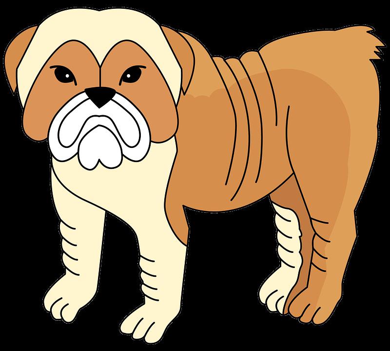 Bulldog clipart transparent