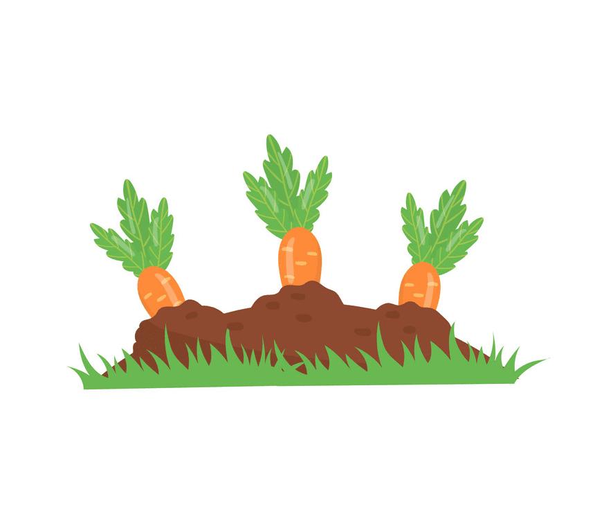 Carrot Garden clipart