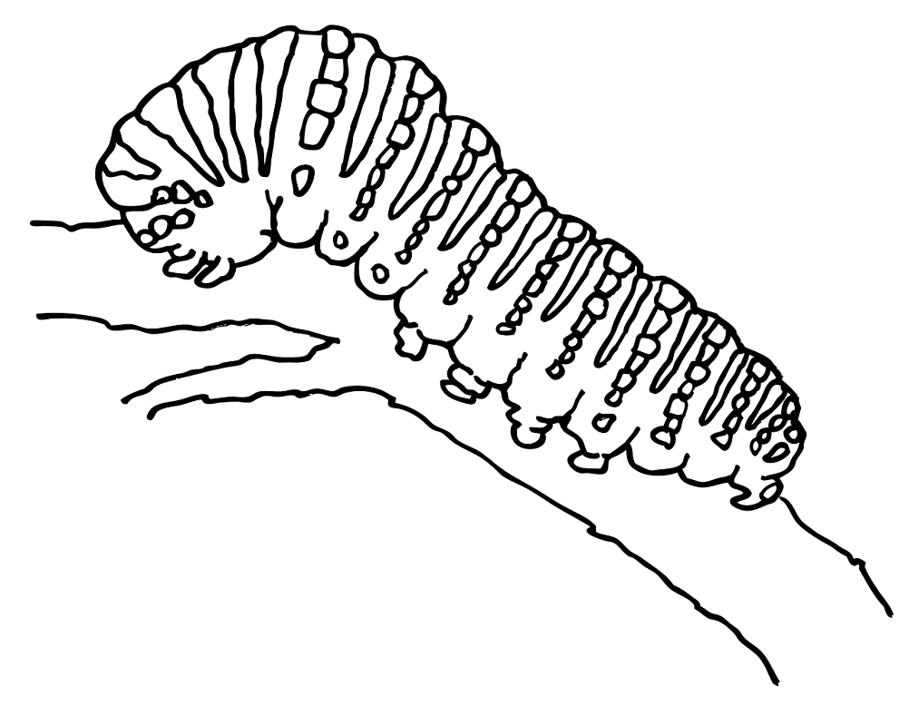 Caterpillar Clipart Black and White free