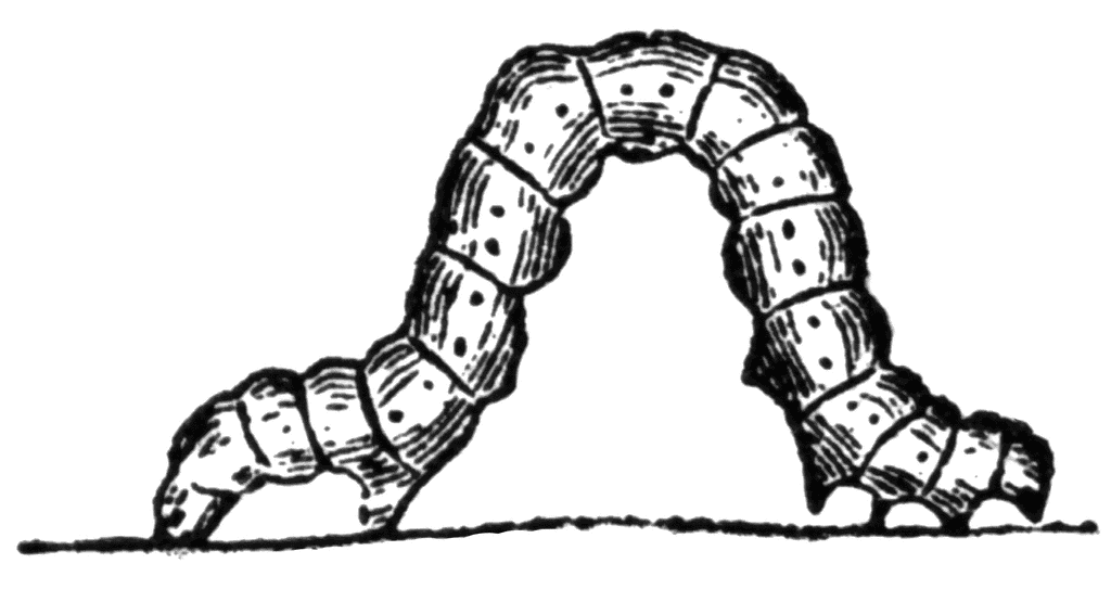 Caterpillar Clipart Black and White png images