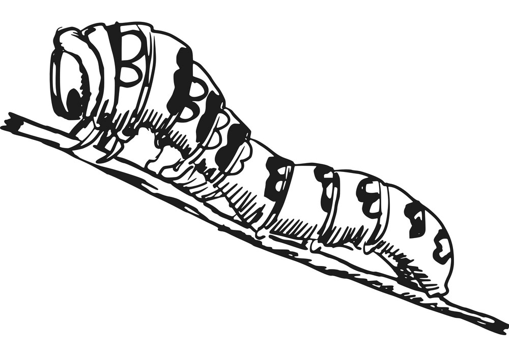Caterpillar Clipart Black and White png