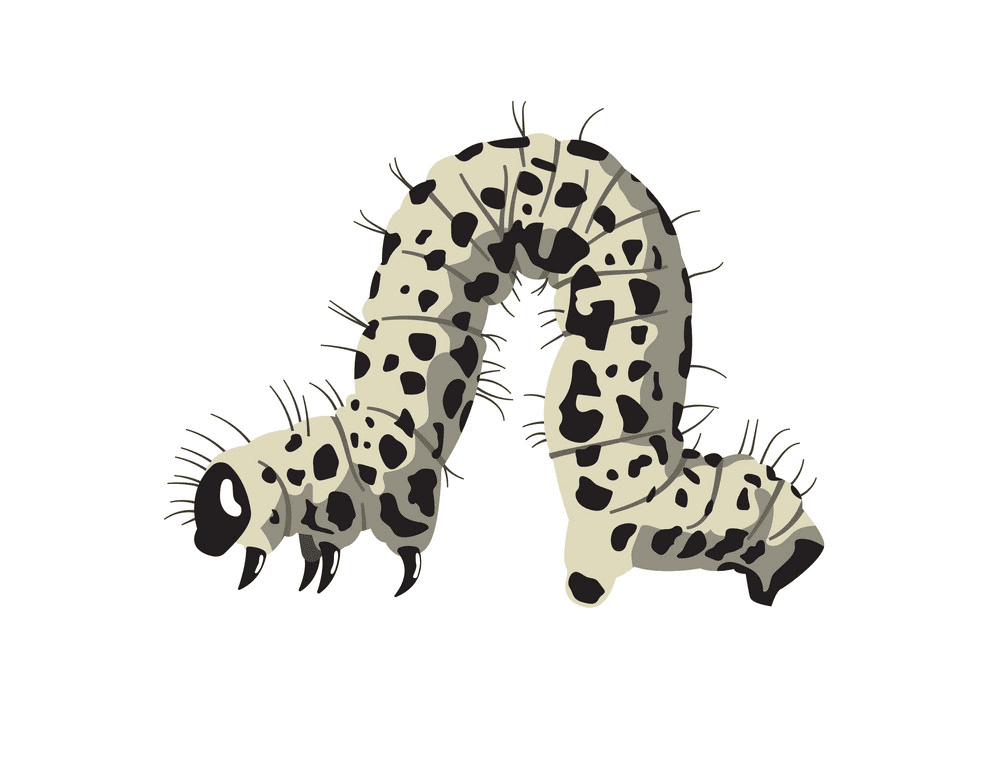 Caterpillar clipart free image