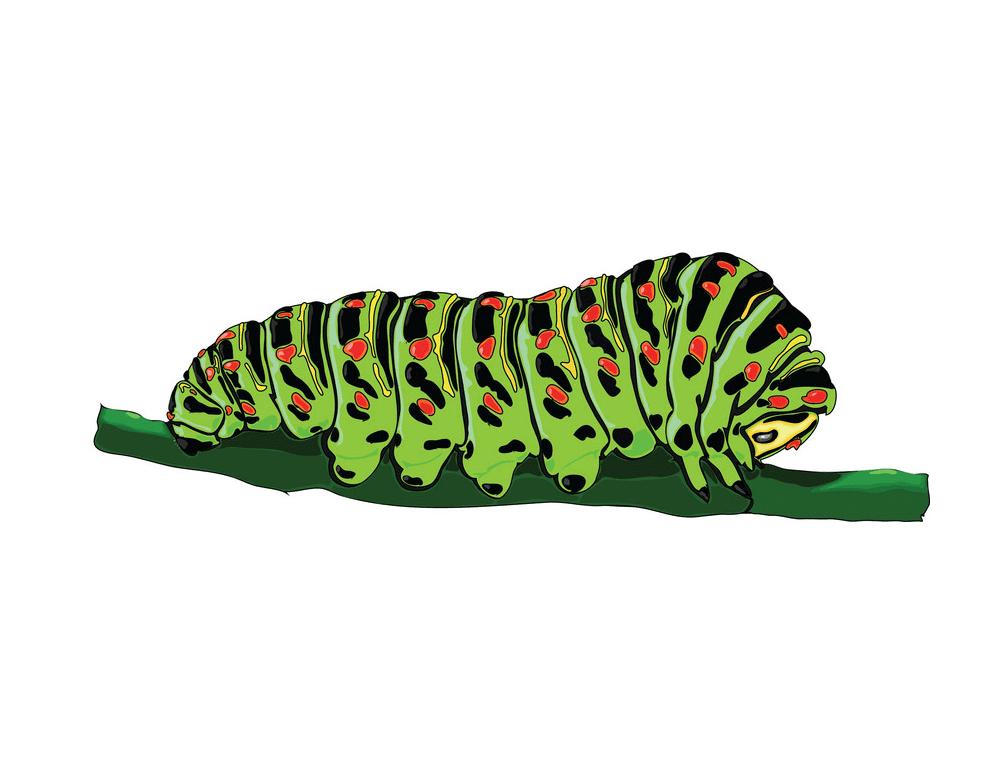 Caterpillar clipart png free