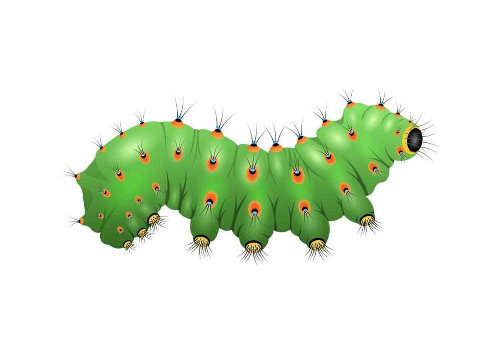 Caterpillar clipart png