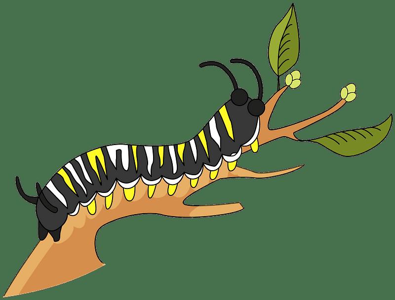 Caterpillar clipart transparent 1