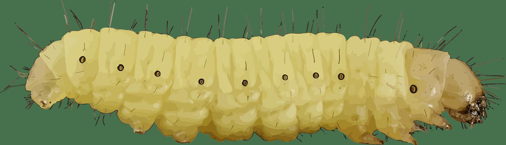 Caterpillar clipart transparent 3