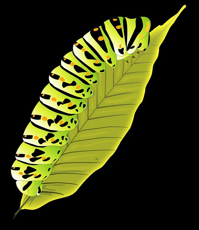 Caterpillar clipart transparent background 13