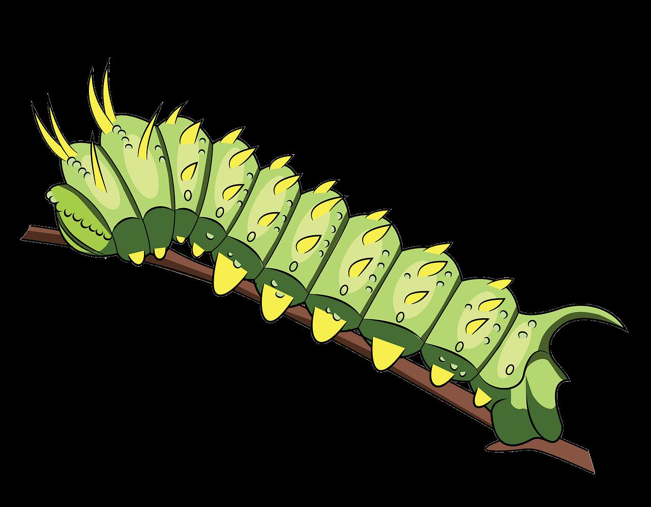 Caterpillar clipart transparent background 7
