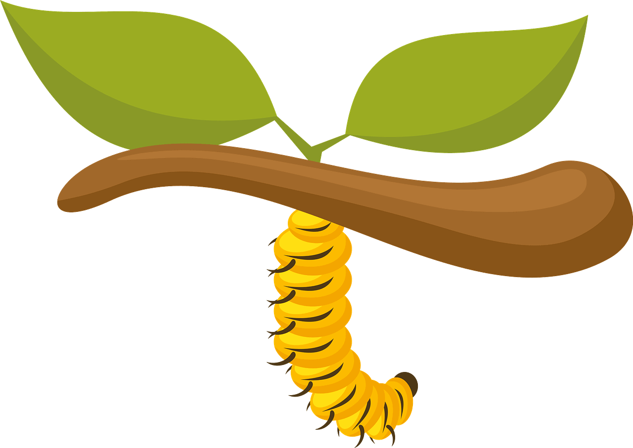 Caterpillar clipart transparent background 8