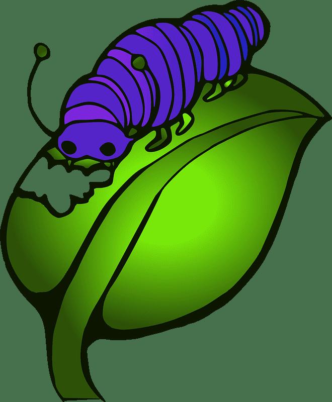 Caterpillar clipart transparent images