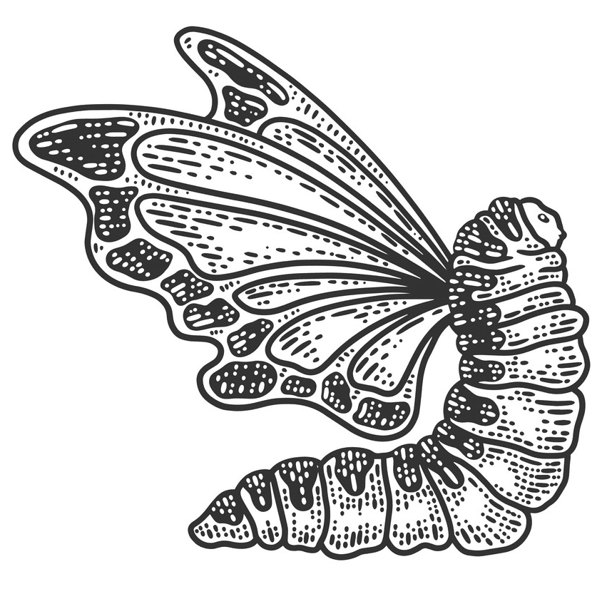 Caterpillar to Butterfly clipart free