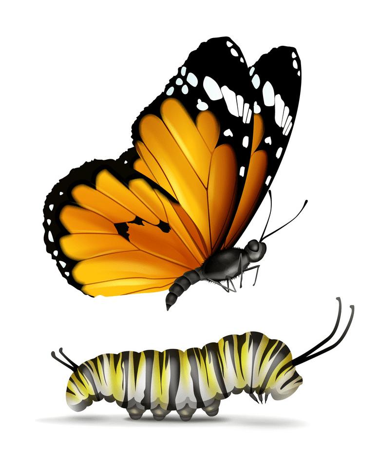 Caterpillar to Butterfly clipart