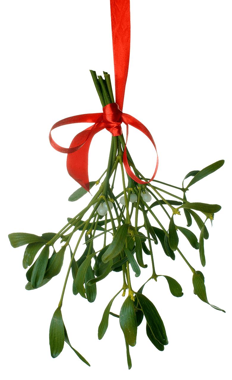 Clipart Mistletoe 4