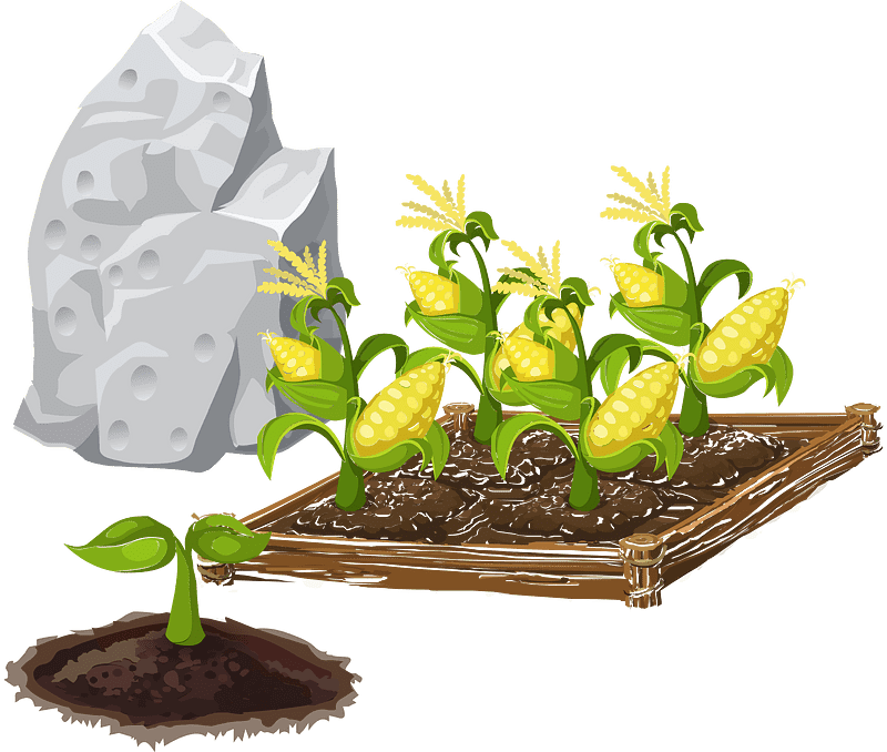 Corn Garden clipart transparent