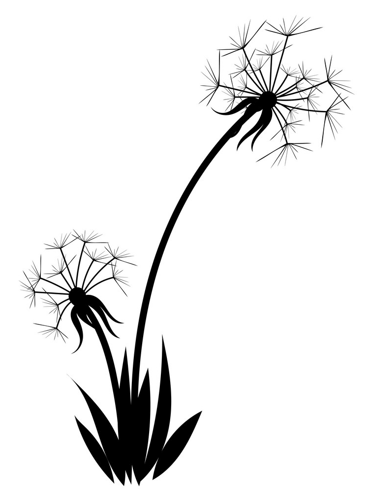 Dandelion Clipart Black and White 2