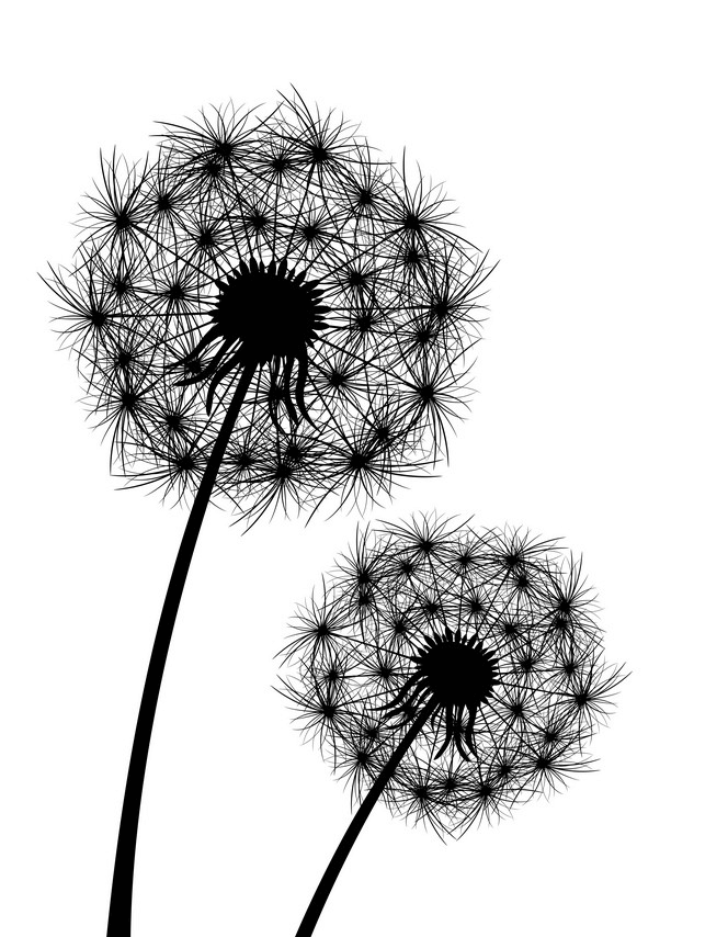 Dandelion Clipart Black and White 3