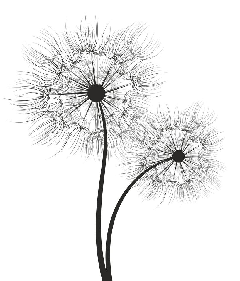 Dandelion Clipart Black and White 5