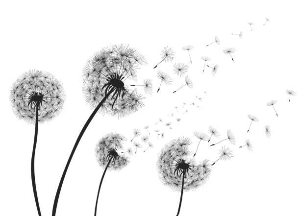 Dandelion Clipart Black and White 7