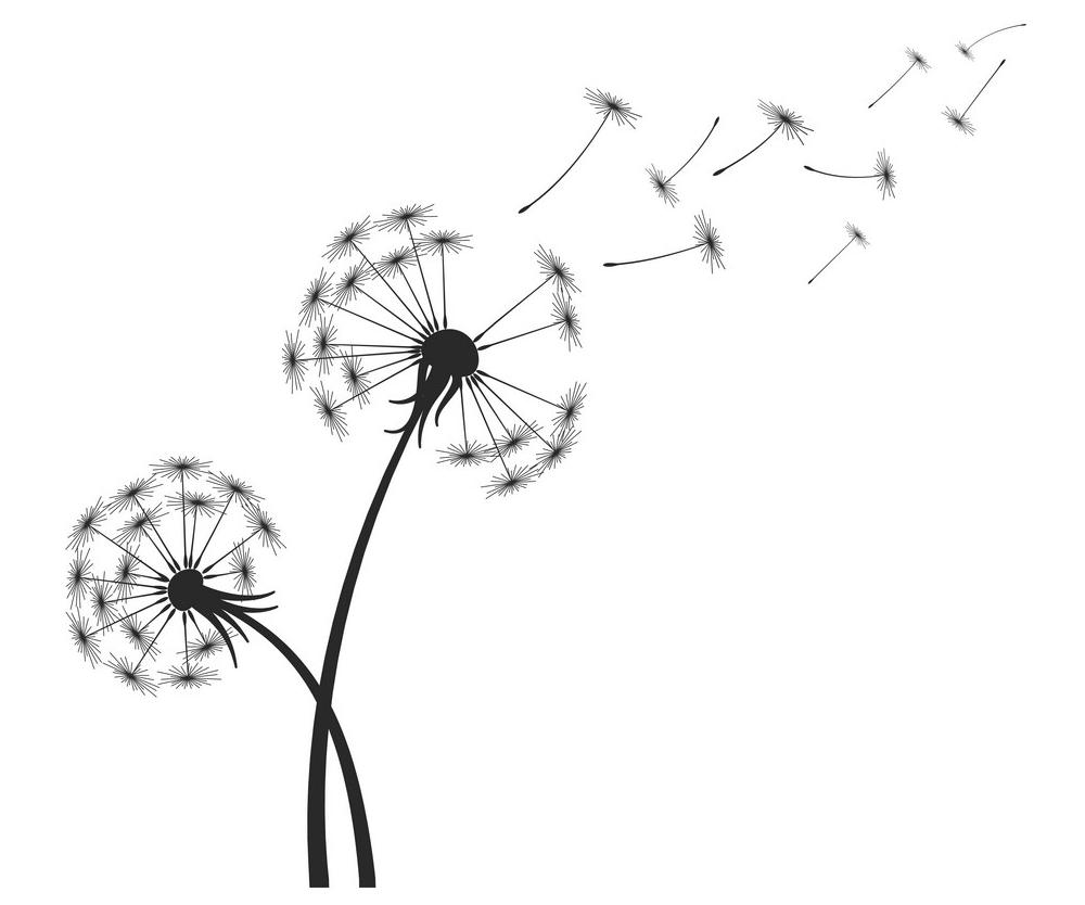 Dandelion Clipart Black and White 8