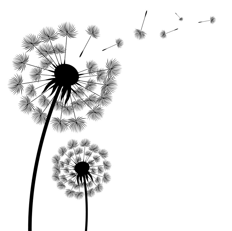 Dandelion Clipart Black and White free image