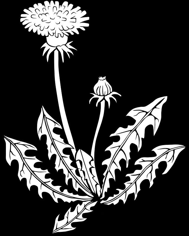 Dandelion Clipart Black and White free