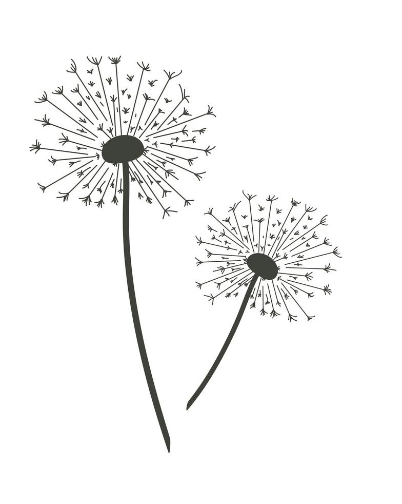 Dandelion Clipart Black and White image