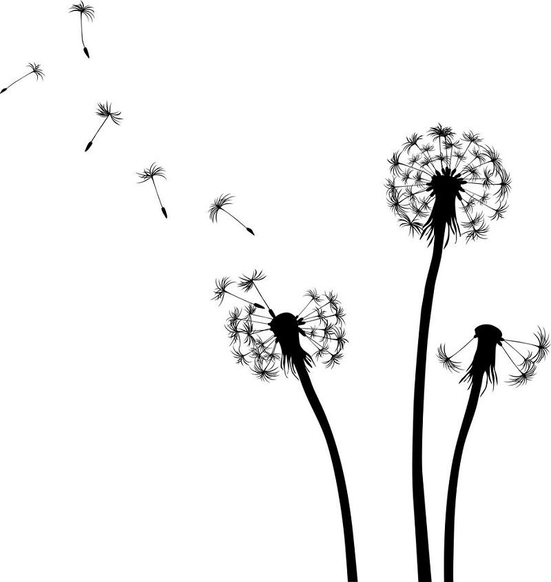 Dandelion Clipart Black and White images