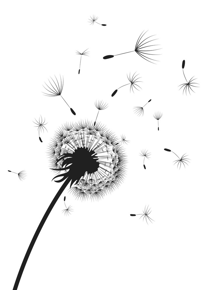 Dandelion Clipart Black and White picture
