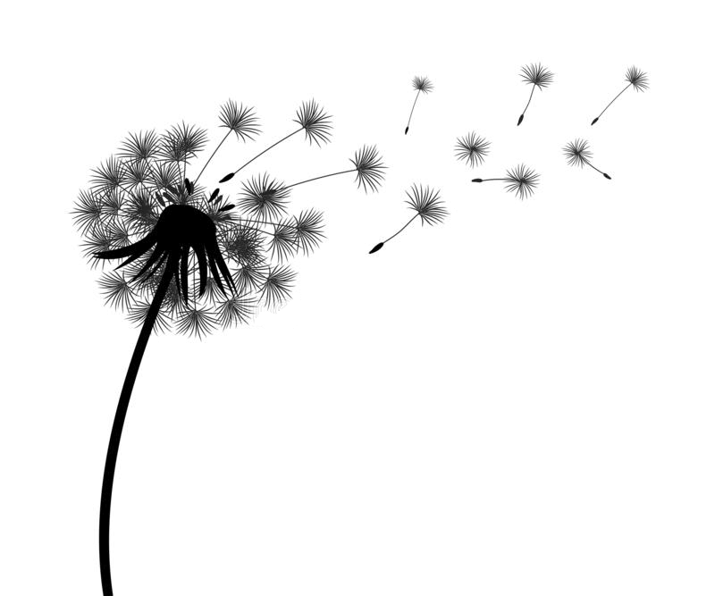 Dandelion Clipart Black and White png free