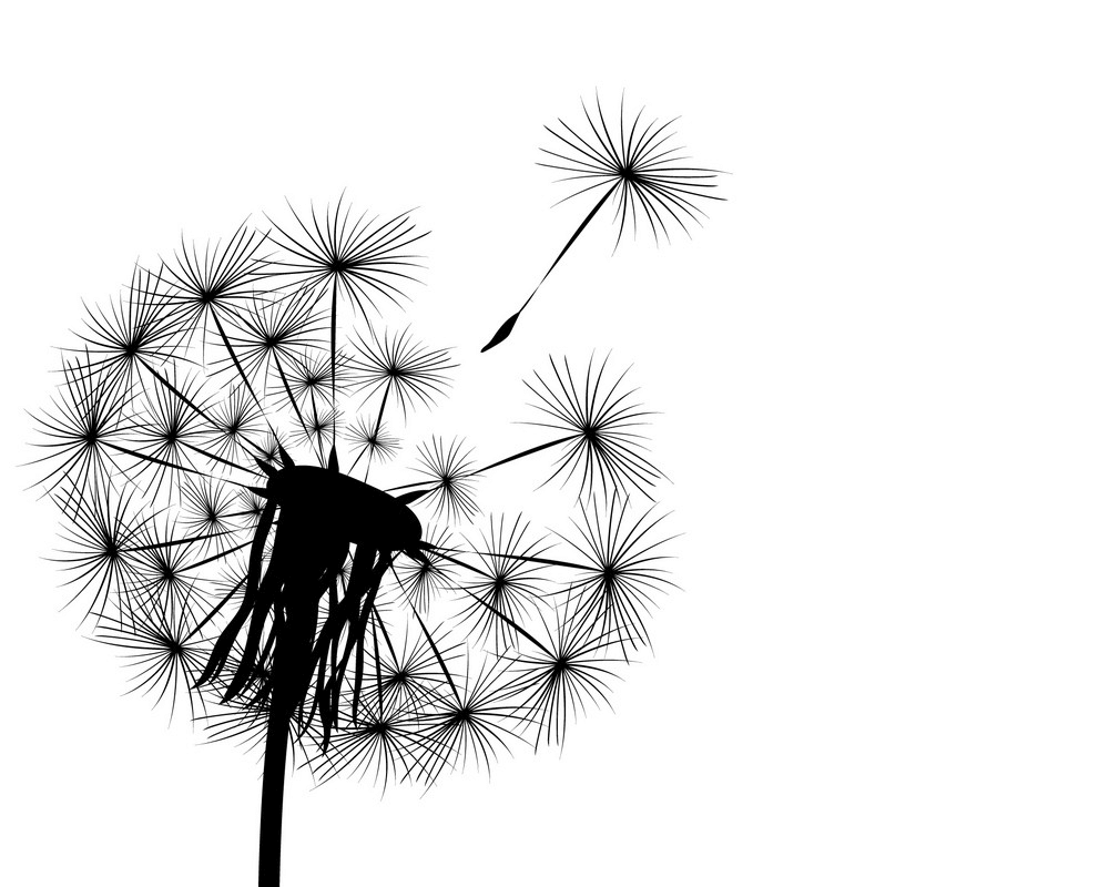 Dandelion Clipart Black and White png image