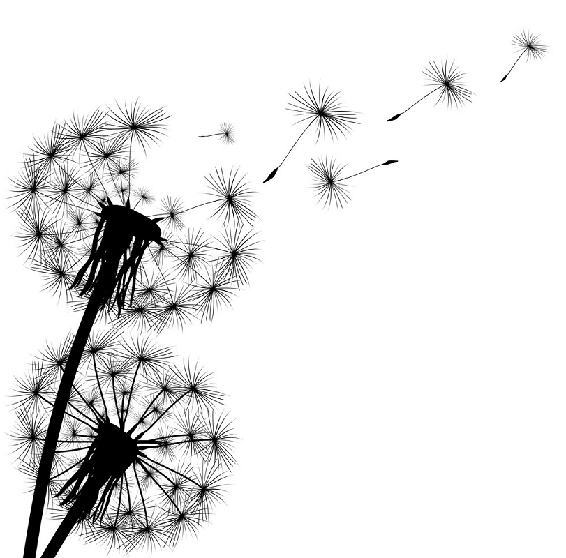 Dandelion Clipart Black and White png images