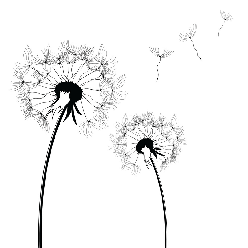 Dandelion Clipart Black and White png