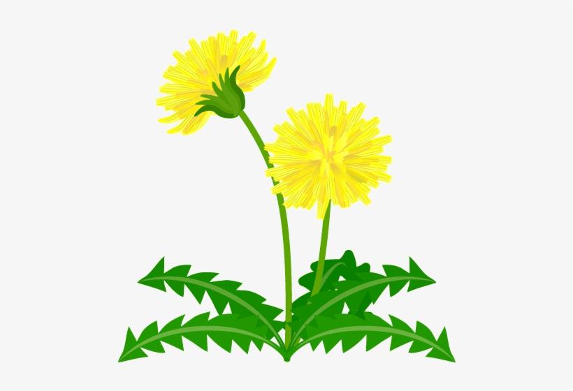 Dandelion clipart 1