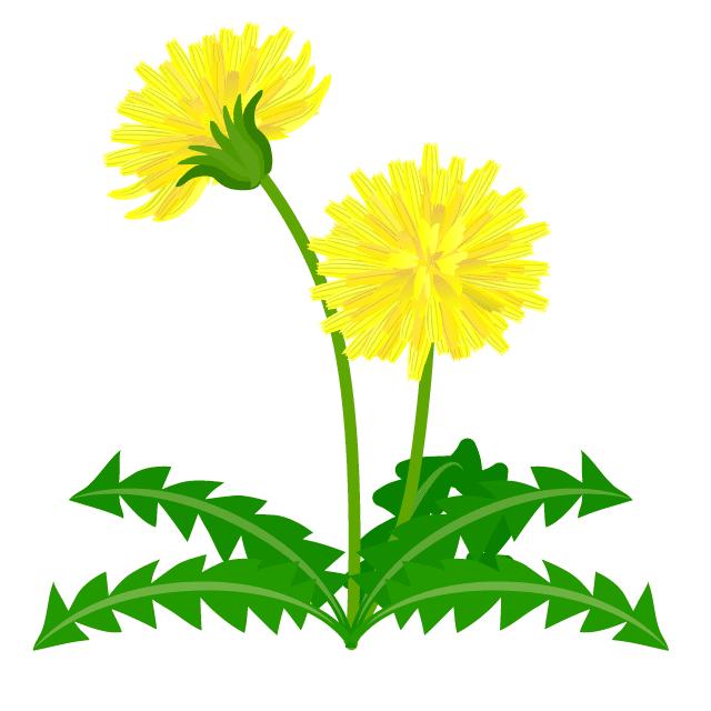 Dandelion clipart 10